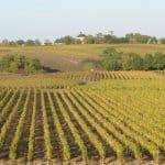 Quoi faire en Layon : balade sur le circuit des vins d'Anjou